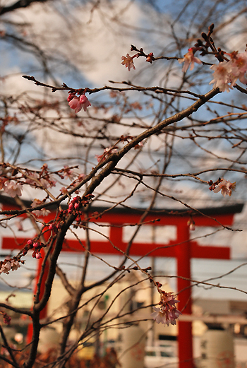 blog-平野正月b.jpg