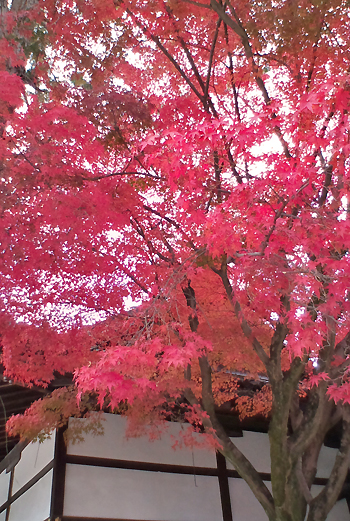 blog-2010imamiya1.jpg