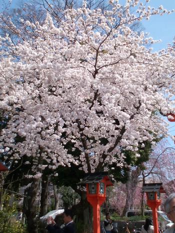 blog-oukasai-2.jpg