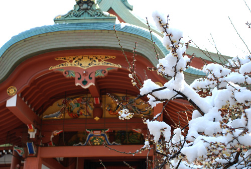 blog-yuki-ume1.jpg