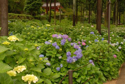blognew-mimuroto3.jpg