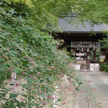 blognew-nasinoki1.jpg
