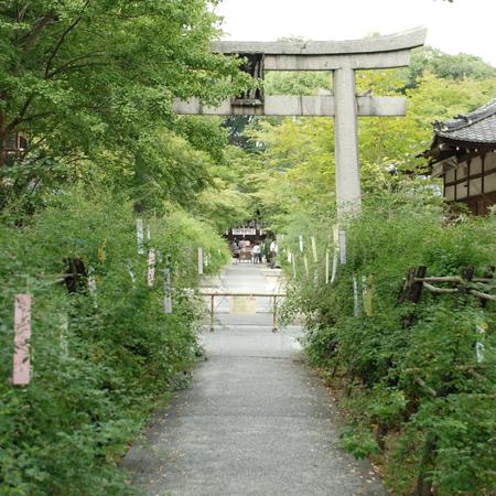 blognew-nasinoki3.jpg