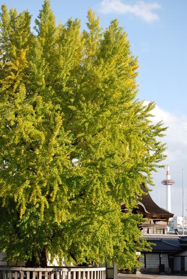blognew-nishihonganji1.jpg